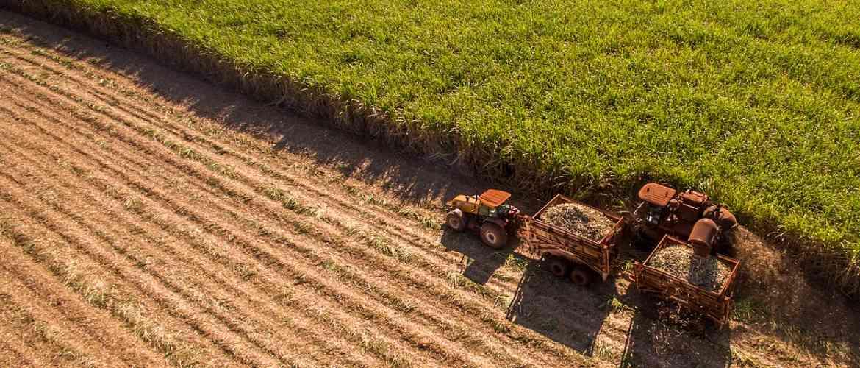 Os desafios de inovação para o agronegócio