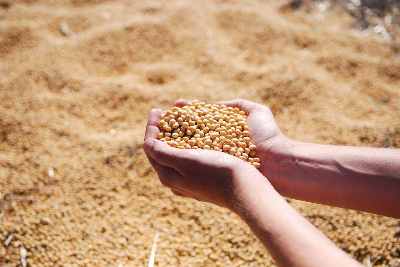 Agricultura de precisão é tecnologia aliada à produção agrícola