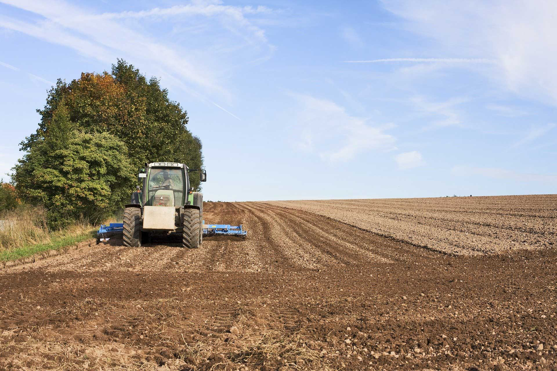 agricultura2W.jpg
